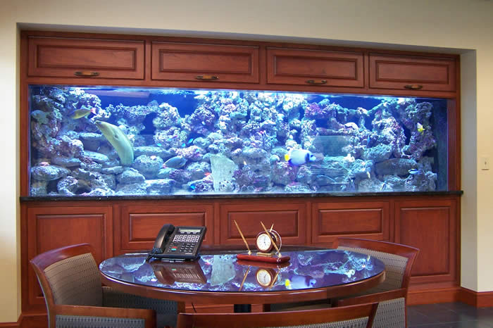 huge fish tank in CEO office