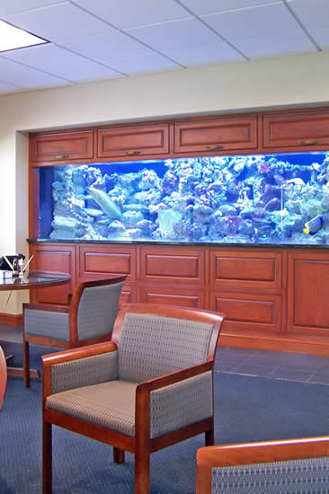 large salt water fish tank in CEO office